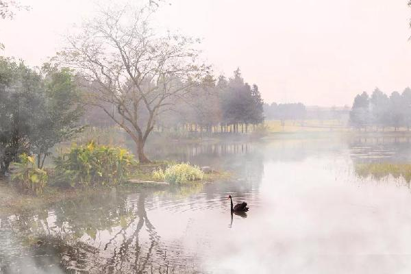 Mysterious foggy view of Chenshan Botanical Garden in Sheshan