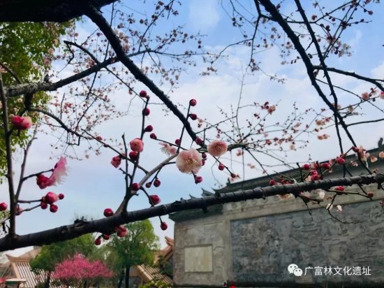 Plum blossoms seen at Guangfulin Relics Park