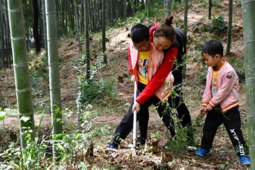 Have a taste of fresh bamboo shoots in Sheshan