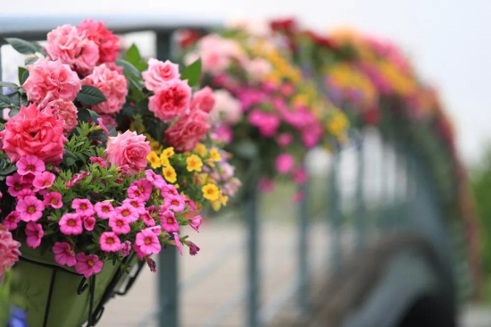 Attractions to enjoy Mother's Day in Sheshan