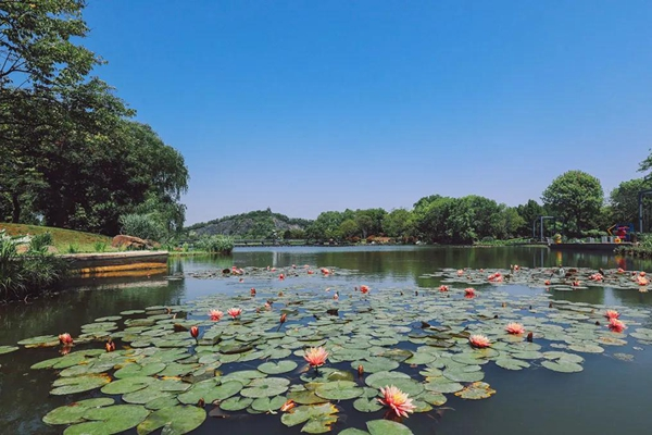 Best places to visit at Sheshan resort in summer