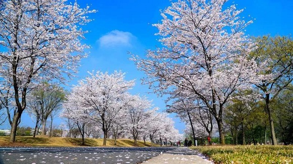 In pics: Chenshan Botanical Garden in four seasons